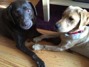 Barney & Piper